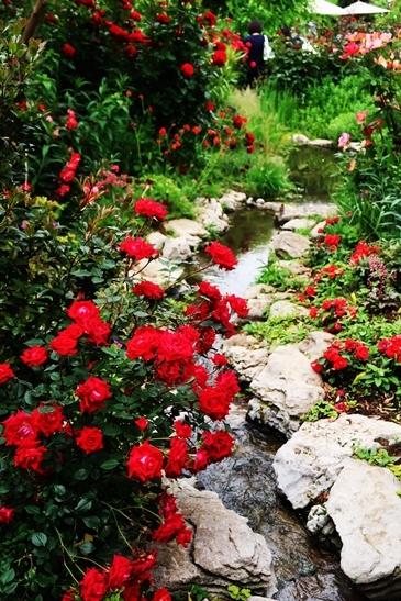 横浜イングリッシュガーデン 薔薇が満開_d0353281_00404190.jpg