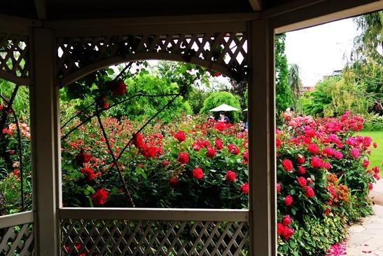横浜イングリッシュガーデン 薔薇が満開_d0353281_00412563.jpg