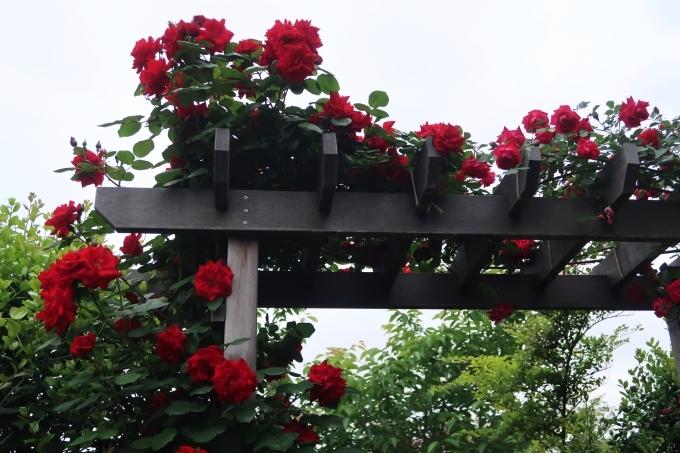 横浜イングリッシュガーデン 薔薇が満開_d0353281_00452324.jpg