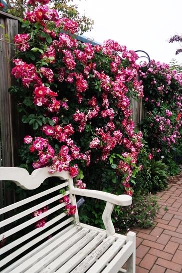 横浜イングリッシュガーデン 薔薇が満開_d0353281_00464019.jpg