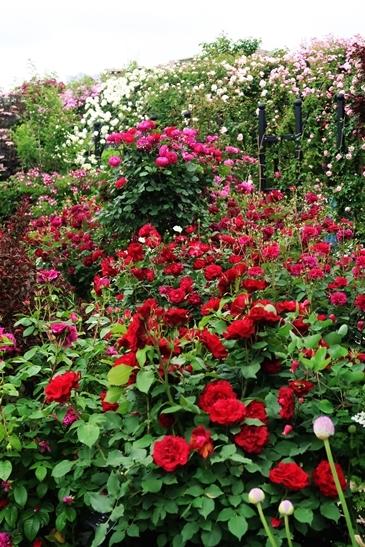 横浜イングリッシュガーデン 薔薇が満開_d0353281_00470242.jpg