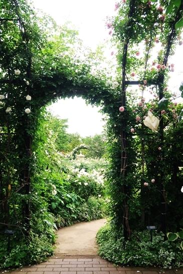 横浜イングリッシュガーデン 薔薇が満開_d0353281_00475379.jpg