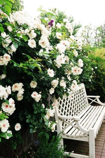 横浜イングリッシュガーデン 薔薇が満開_d0353281_00481684.jpg
