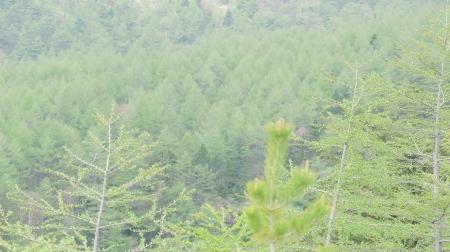 湯の丸高原開山祭_e0120896_13082973.jpg