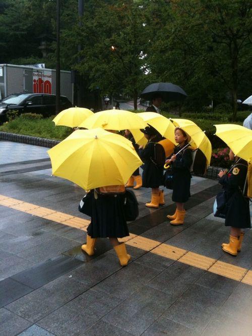 雨の日のヒヨコたち_c0141013_1411540.jpg