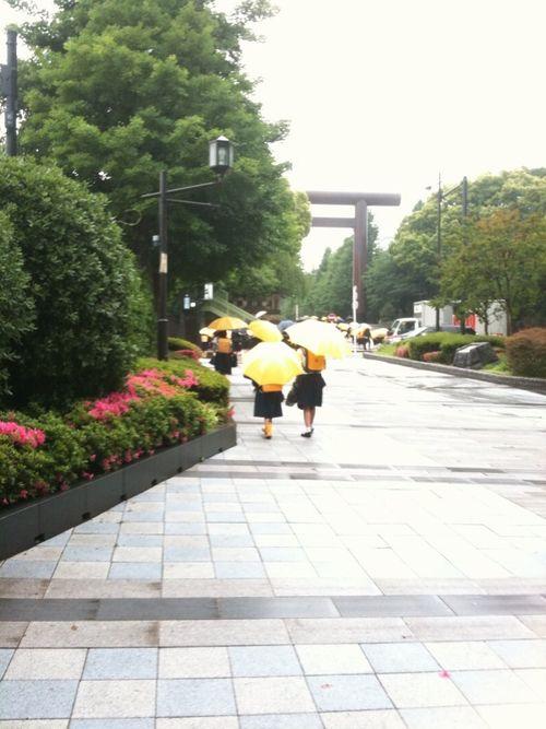 雨の日のヒヨコたち_c0141013_145789.jpg