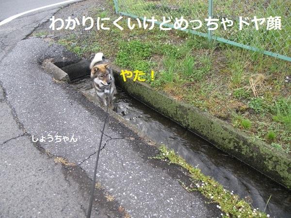 f0143123_09285938.jpg