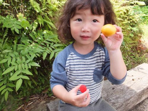 好きな果物は田舎の味_d0336460_03550000.jpg