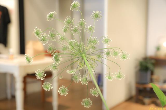 花と器_a0158797_22430484.jpg