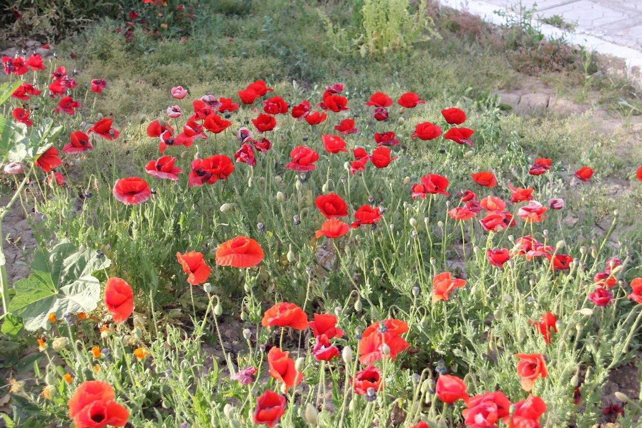 トルクメニスタンの旅(19) メルブ遺跡 スルタン・サンジャール廟_c0011649_08453169.jpg
