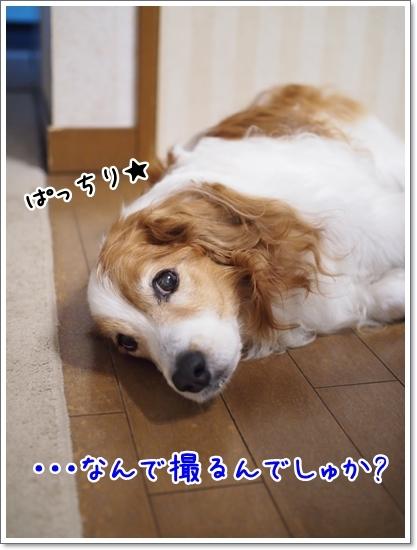 d0013149_00130897.jpg