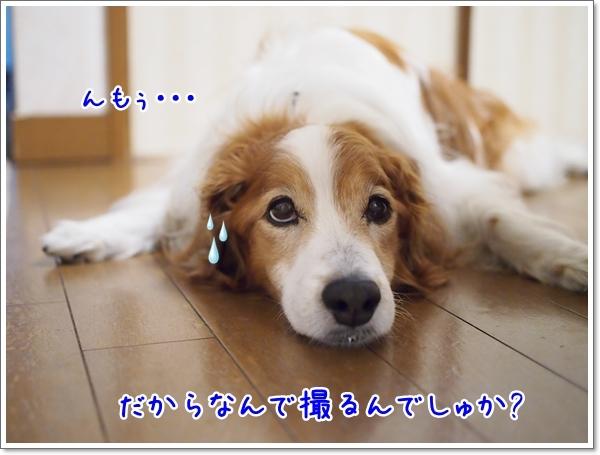 d0013149_00383905.jpg