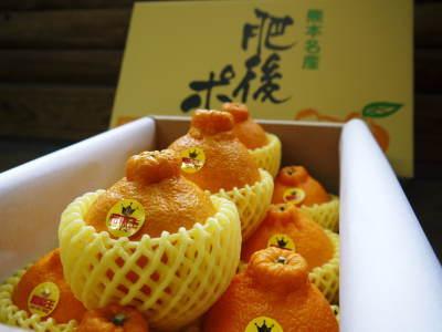 究極の柑橘「せとか」 今年も元気な花が咲きました!収穫は2月上旬!惜しまぬ手間ひまと匠の技で育てます_a0254656_08234845.jpg