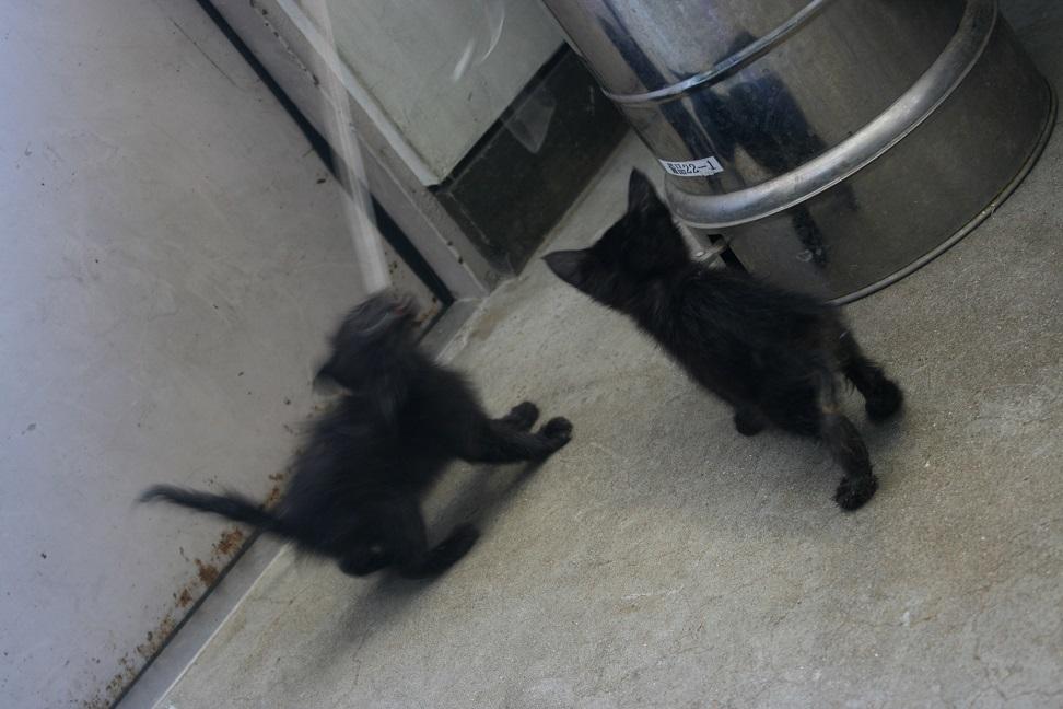 【移動先募集】センター(支所)収容の子猫・成猫(6/4訪問)_f0242002_22092768.jpg