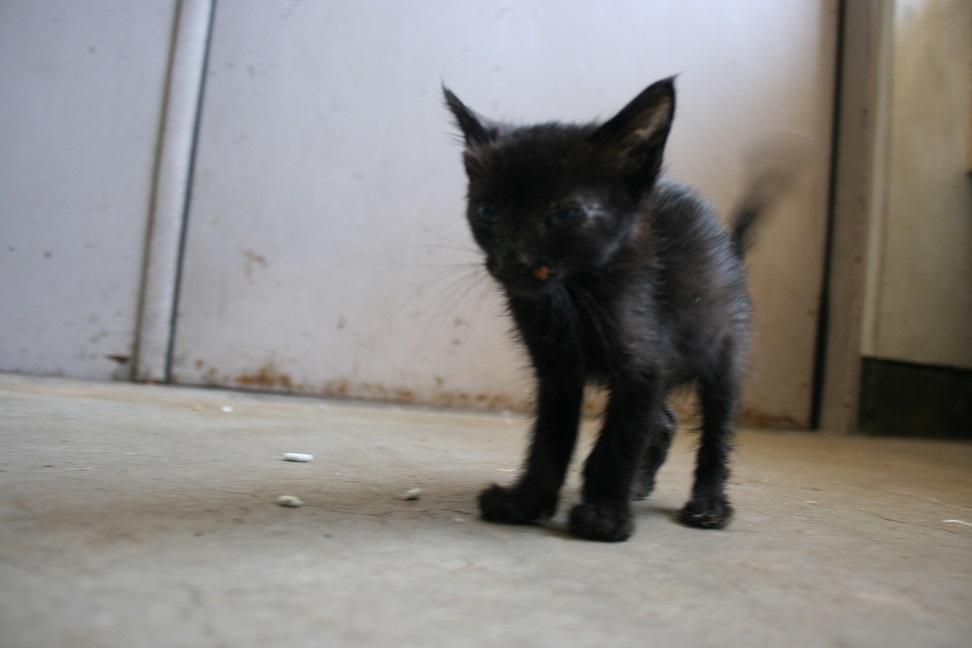 【移動先募集】センター(支所)収容の子猫・成猫(6/4訪問)_f0242002_22093308.jpg