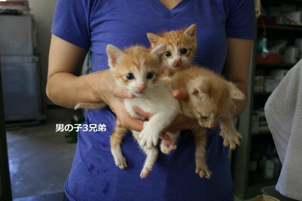 【移動先募集】センター(支所)収容の子猫・成猫(6/4訪問)_f0242002_22100167.jpg