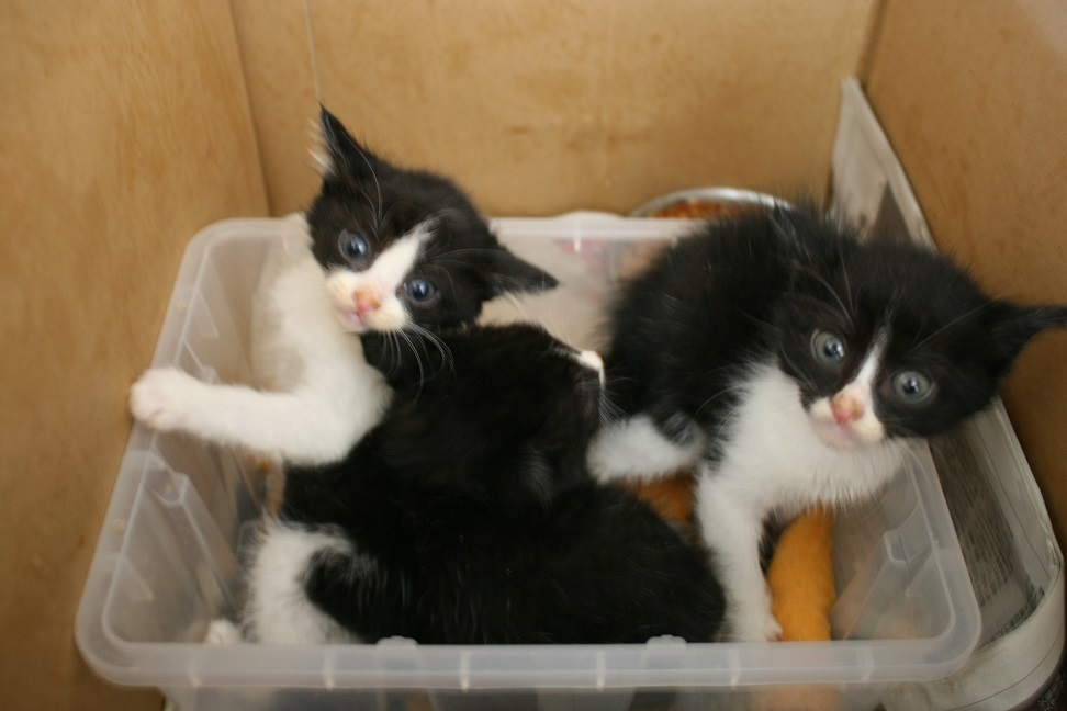 【移動先募集】センター(支所)収容の子猫・成猫(6/4訪問)_f0242002_22103571.jpg