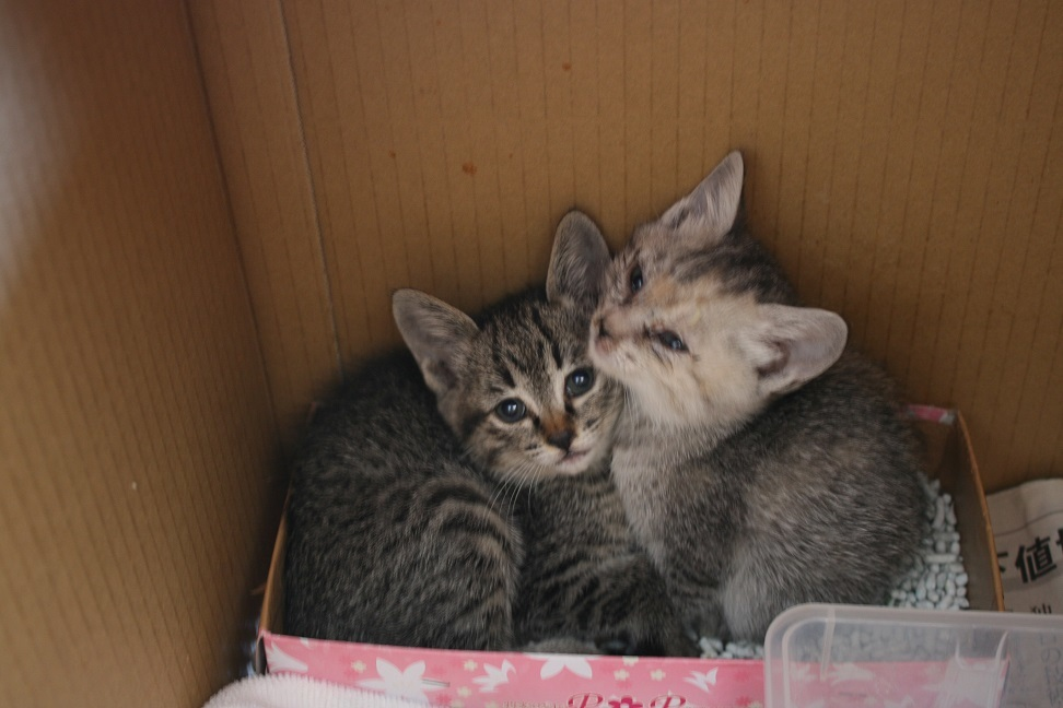 【移動先募集】センター(支所)収容の子猫・成猫(6/4訪問)_f0242002_22104515.jpg