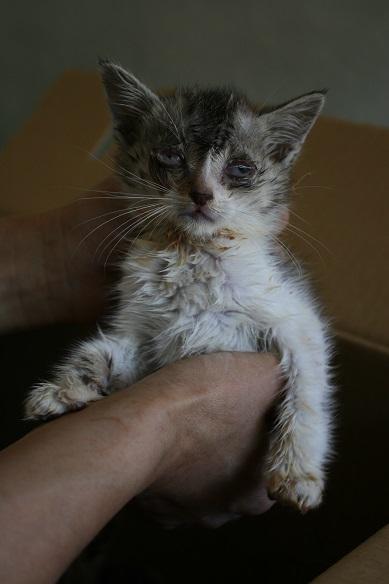 【移動先募集】センター(支所)収容の子猫・成猫(6/4訪問)_f0242002_22335053.jpg