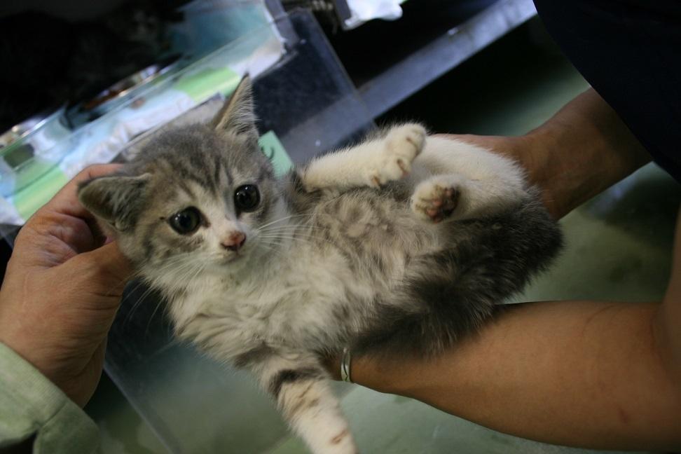 【移動先募集】センター(支所)収容の子猫・成猫(6/4訪問)_f0242002_22363857.jpg