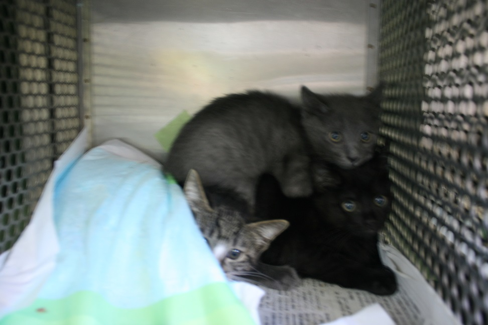 【移動先募集】センター(支所)収容の子猫・成猫(6/4訪問)_f0242002_22593541.jpg