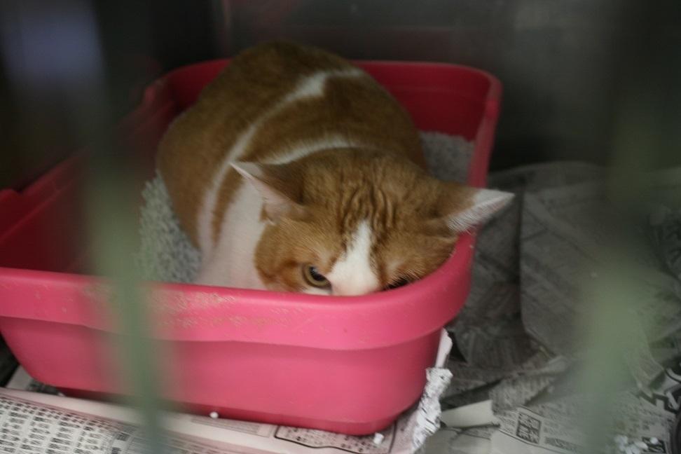 【移動先募集】センター(支所)収容の子猫・成猫(6/4訪問)_f0242002_23042503.jpg
