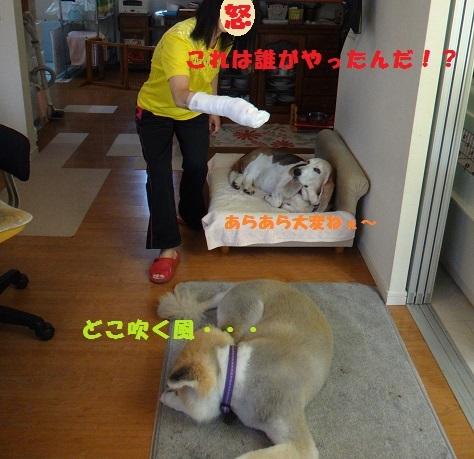 f0121712_19003698.jpg
