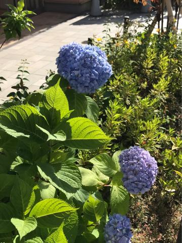 「夏に咲く花たち」_b0134715_09172220.jpg