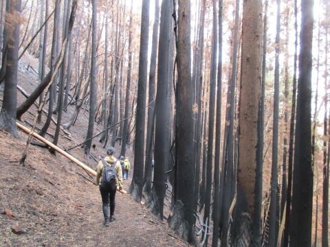 尾崎半島林野火災の被害_d0057215_20411432.jpg