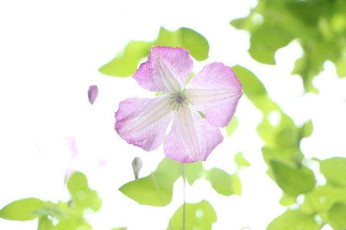 5月下旬 庭に咲く花_d0150720_19074380.jpg