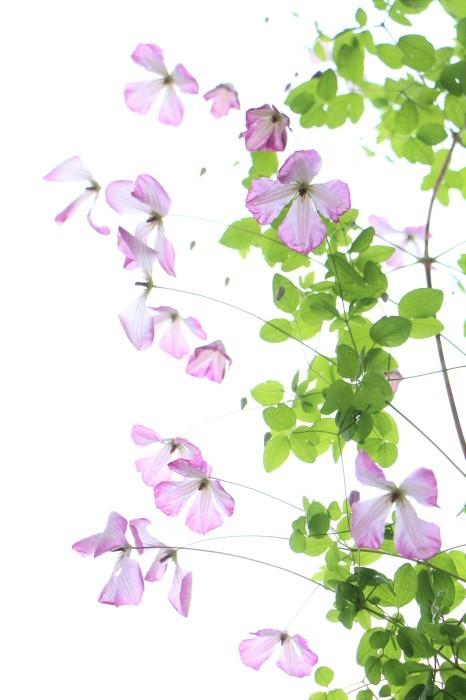 5月下旬 庭に咲く花_d0150720_19075937.jpg