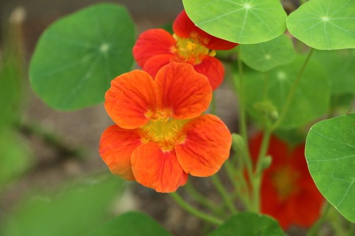 5月下旬 庭に咲く花_d0150720_19082904.jpg