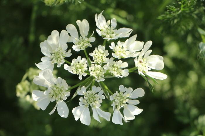 5月下旬 庭に咲く花_d0150720_19120625.jpg