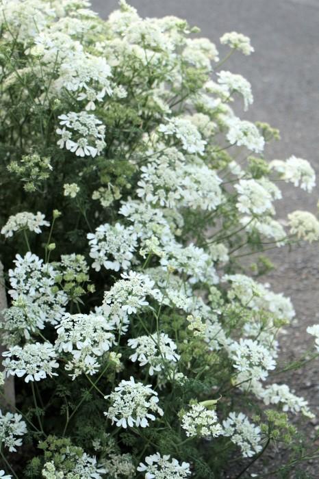 5月下旬 庭に咲く花_d0150720_19122653.jpg