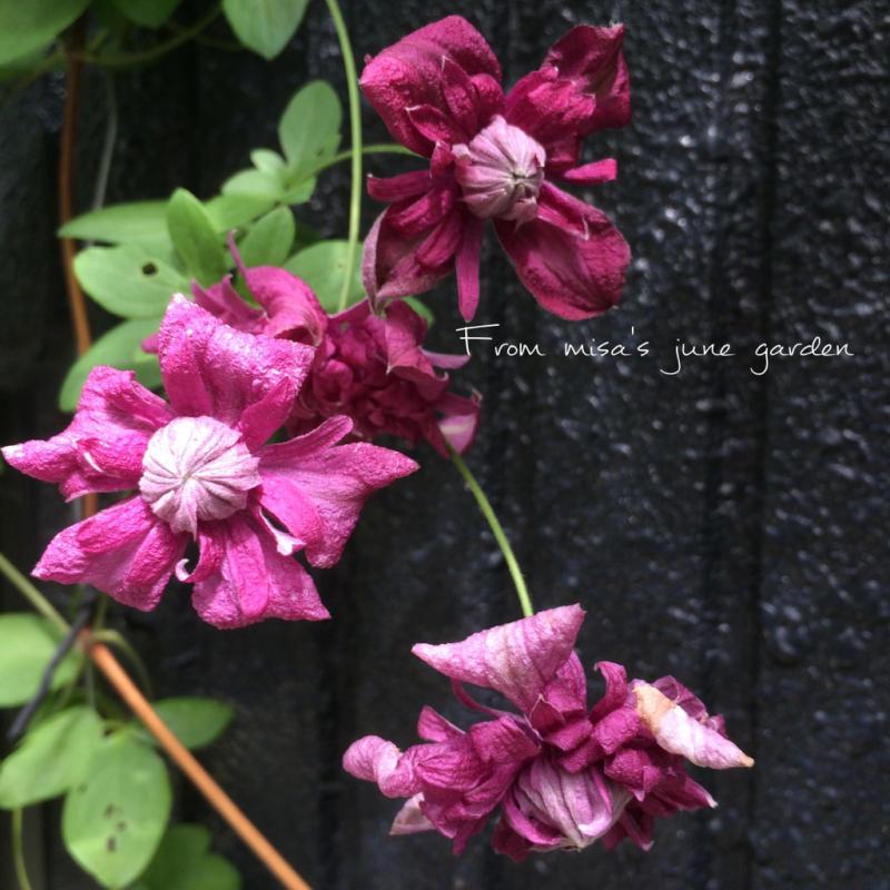 d0350392_21131690.jpg