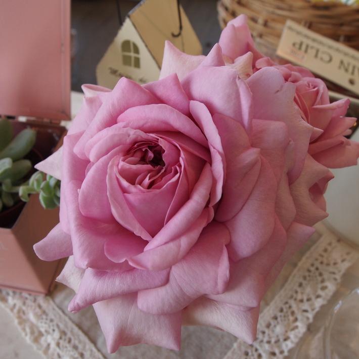 バラの鉢植え栽培ヒストリー_a0292194_16442076.jpg