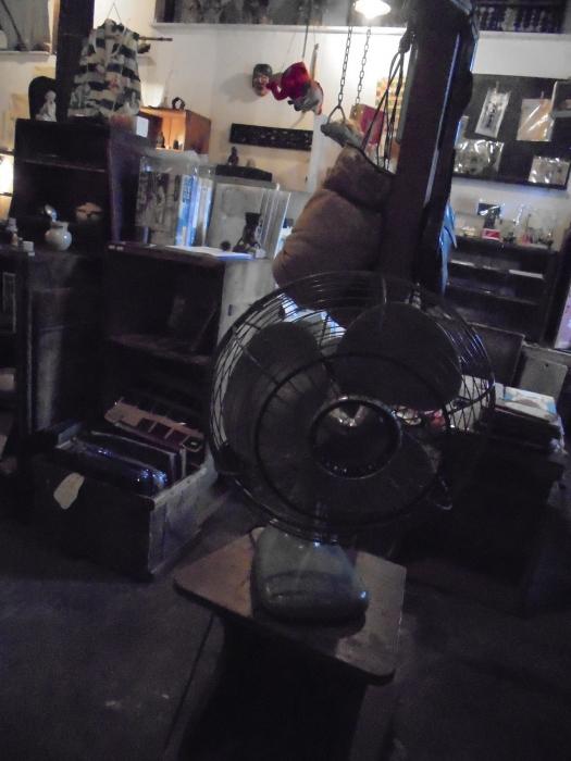 扇風機とのせめぎ合い_e0350308_20011205.jpg