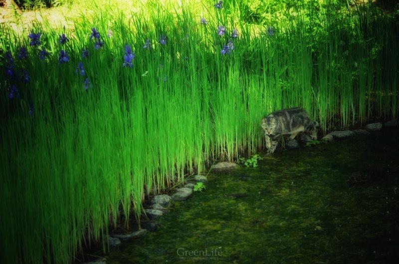 The Secret Garden #3_f0321522_14411195.jpg