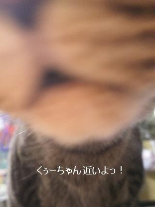 b0118850_17350619.jpg