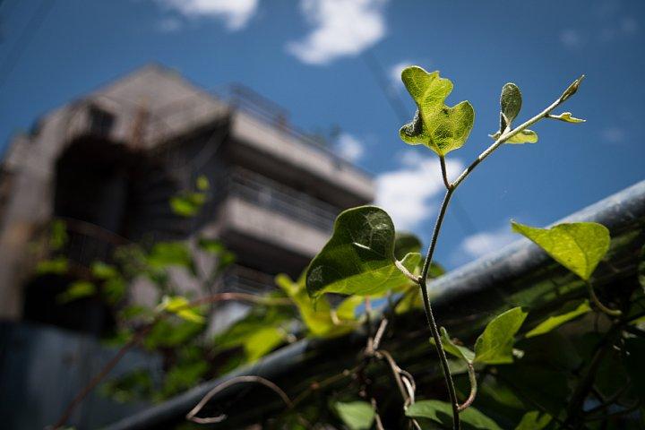 新緑の中で朽ちる老舗旅館_d0353489_820507.jpg