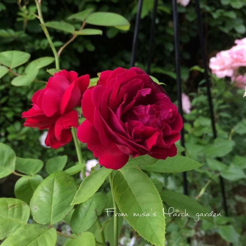d0350392_20085860.jpg