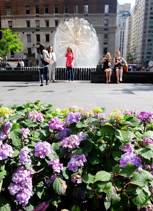 ニューヨークの中心で噴水と紫陽花と_b0007805_7383382.jpg