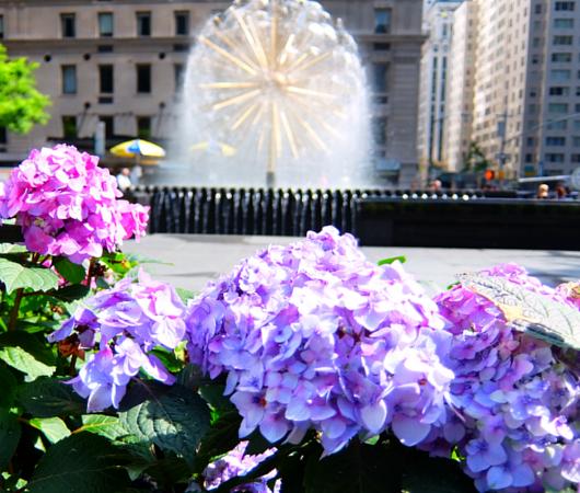 ニューヨークの中心で噴水と紫陽花と_b0007805_742415.jpg