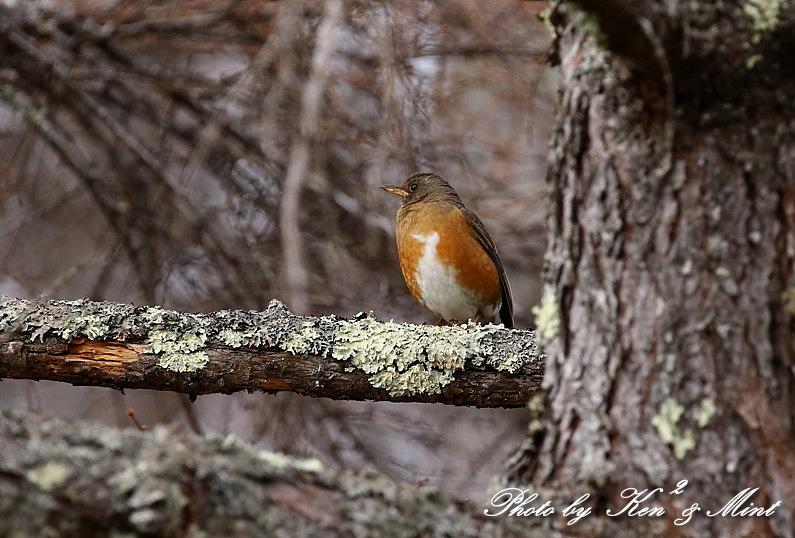 高原で会えた鳥達^^ 一挙公開 (*^^*)♪ 世界遺産も♪_e0218518_19435390.jpg
