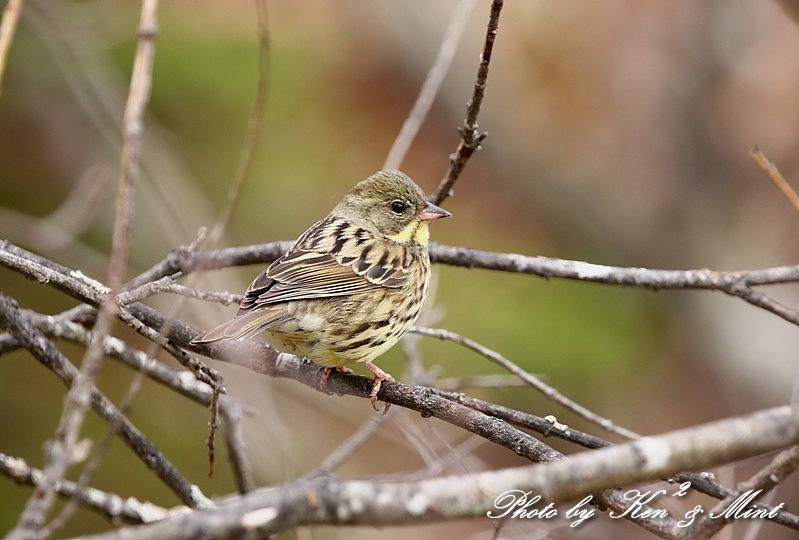 高原で会えた鳥達^^ 一挙公開 (*^^*)♪ 世界遺産も♪_e0218518_19451495.jpg