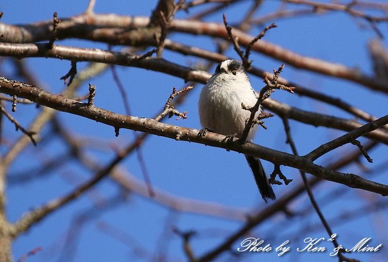 高原で会えた鳥達^^ 一挙公開 (*^^*)♪ 世界遺産も♪_e0218518_19454458.jpg