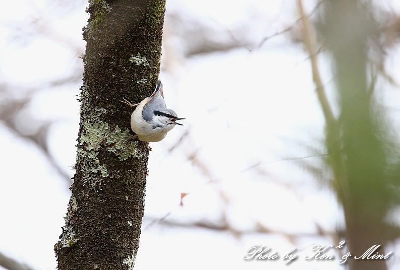 高原で会えた鳥達^^ 一挙公開 (*^^*)♪ 世界遺産も♪_e0218518_19463365.jpg