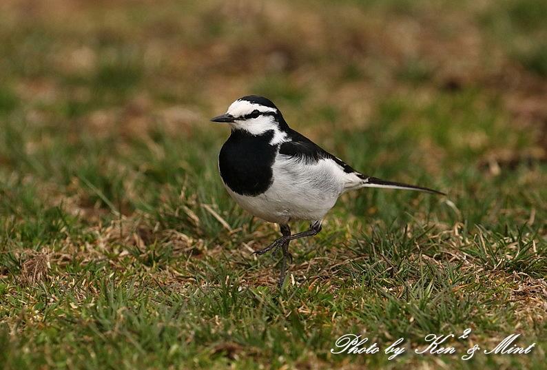 高原で会えた鳥達^^ 一挙公開 (*^^*)♪ 世界遺産も♪_e0218518_19470384.jpg