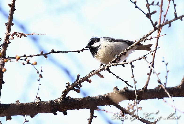 高原で会えた鳥達^^ 一挙公開 (*^^*)♪ 世界遺産も♪_e0218518_19473719.jpg
