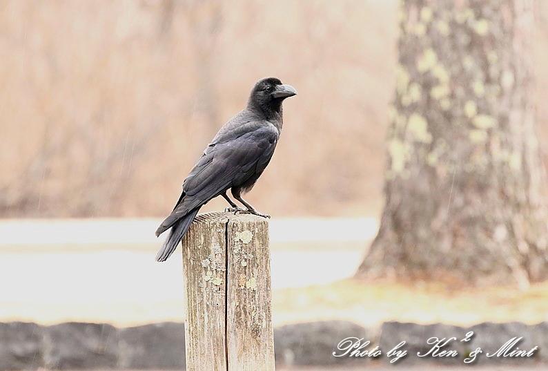 高原で会えた鳥達^^ 一挙公開 (*^^*)♪ 世界遺産も♪_e0218518_19481799.jpg